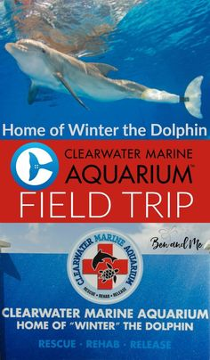 We took a field trip to Clearwater Marine Aquarium, home of Winter the dolphin of the Dolphin Tales movies fame. Come take a peek at what we learned! Home Learning, Learning Activities, Time Activities, Clearwater Marine Aquarium, Dolphin Tale, Virtual Field Trips, Science Lessons, Kids Education, Landscape Photos