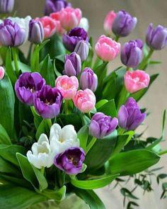 Beautiful Flowers Garden, Beautiful Flower Arrangements, Beautiful Roses, Pretty Flowers, Red Tulips, Tulips Flowers, Good Morning Flowers Quotes, Montreal Botanical Garden, Window Box Flowers