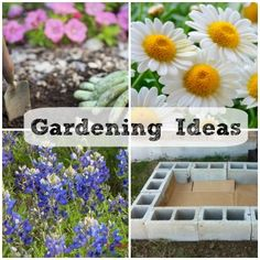 Gardening tips and tricks you need to know!  LOTS of great information!!!