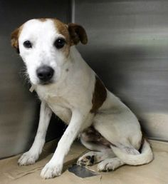 8-year-old dog wonders what he did wrong to end up on death row at SC shelter HE NEEDS HELP NOW HE IS A GOOD LOVING DOG.