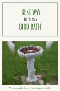 You've had your wonderful bird bath for about a week now, and you notice it's starting to get dirty. Well, what's the best way to clean it? We show you how to clean a bird bath with some DIY ideas while keeping it safe and sanitary for your favorite wild birds. We discuss what equipment you'll need as well as how often your backyard bird bath should be cleaned   #BirdWatching #BirdBaths #Garden #Birds #DIY #Backyard Garden Birds, Backyard Birds, Bath Cleaners, How Do You Clean, Bird Baths, Birdwatching, Wild Birds, Feng Shui, Habitats