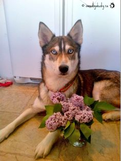 Jenna Drady dog with a bouquet of lilacs.
