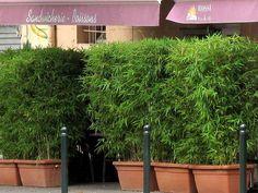 Bambus als Sichtschutz für die Gastronomie kaufen | Bambus-Shop der BAMBUSBÖRSE