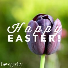 #ShareTheLovegevity #Lovegevity #Love #LWPI #Quotes #HappyEaster