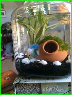 old flour JAR for a fish tank makes for an elegant betta environment that you can add live plants to for healthier water. I've never seen a more active beta than Archer! Betta Fish Care - Betta Fish Care - A Betta Fish Must Read! Water Terrarium, Aquarium Terrarium, Betta Aquarium, Betta Fish Types, Betta Fish Care, Betta Fish Bowl, Cool Fish Tanks, Small Fish Tanks, Betta Tank