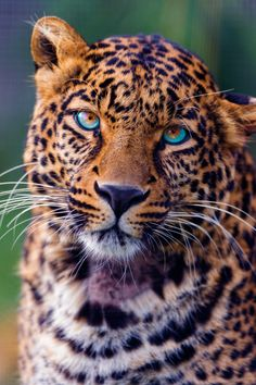 Gorgeous Animal #nature #photography