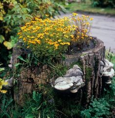 How to make a Tree Stump Planter #dan330 http://livedan330.com/2015/07/13/tree-stump-planters/