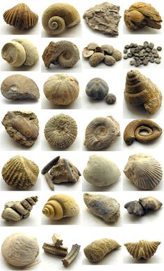 Over the years the kids have found a lot of fossils. I should find a nice way to display them.