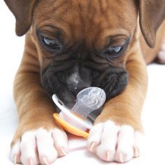 How to introduce your puppy to the NEW baby in the house...
