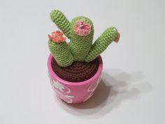 LUNCINETTO DI FRANCA: cactus