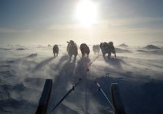 Canadian Inuit dogs pull a sled using traditional harnesses Thursday, Feb. 4, 2010 in Iqaluit, Canada. (AP Photo/Rob Gillies)