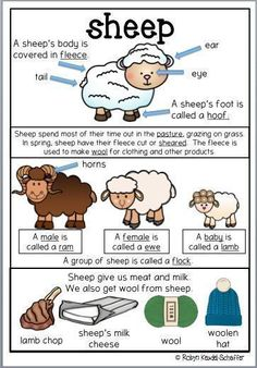 This sheep themed pack is great to go with a farm theme scheme of work.  It is a collection of worksheets and activities.  Included in this pack Poster Printables linked to the poster Comprehension, spelling words, parts of speech worksheets, mathematics