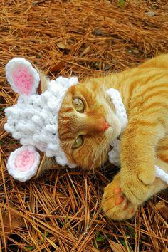 Lamb Cat Hat Lamb Cat Costume Lamb Hat for by iheartneedlework