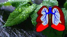 8 hierbas que eliminan el moco combaten las infecciones y ayudan a reparar sus pulmones #salud