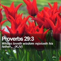 Proverbs 29:3   Whoso loveth wisdom rejoiceth his father ... (KJV)   #Background #Life #Life #Israel #StrengthQuotes #CreationOfGod   http://www.bible-sms.com/