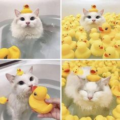 Cute Overload: Internet`s best cute dogs and cute cats are here. Aww pics and adorable animals. Cute Funny Animals, Cute Baby Animals, Animals And Pets, Cute Cats, Funny Cats, Nature Animals, Fun Funny, Farm Animals, I Love Cats