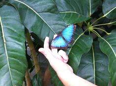 Sertoma Butterfly House and Purdy Marine Cove a great place for hands on interaction.   Visit Sioux Falls