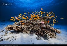Marine life - stock photo