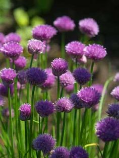 Growing herbs through winter....How to Harvest Chives All Year Round...great new article out today from growveg.com