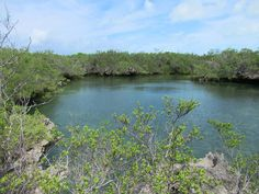 The lagoon of Aldabra Atoll in the Seychelles is is surrounded by limestone outcrops. Jamaica Travel, Blue Lagoon, Seychelles, Natural History, Geography, Iceland, Wildlife, Tours, River