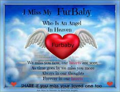 I miss mine. But he was not a fur baby. He was more of a scales baby, but that did not affect my love for him. Some of my biggest tears have been shed for my smallest friends.