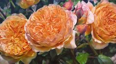 "Image detail for -David Austin Roses"" - Oil by Lyn Diefenabch"