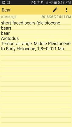 Pleistocene bear