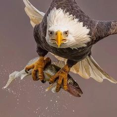 Badass Pictures, Eagle Pictures, Bird Pictures, Nature Animals, Zoo Animals, Wildlife Nature, Animals Planet, Beautiful Birds, Animals Beautiful