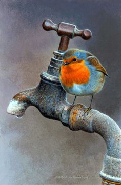 Illustration of Robin bird drinking water © Andrew Hutchinson Illustration of Robin bird drinking water © Andrew Hutchinson, Pretty Birds, Beautiful Birds, Robin Vogel, Robin Bird, Bird Pictures, Robin Pictures, Bird Drawings, Illustration Artists, Bird Illustration