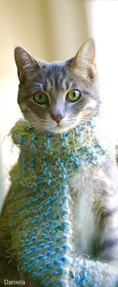 Hello! No Pin Limits Here ༺♥༻ cute green eyes tabby cat wearing a knitted scarf