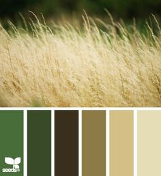 Field tones from Design Seeds