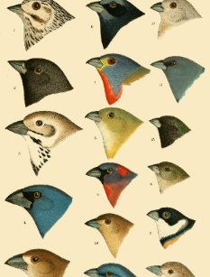 Wellcome Collection publishes book of early infographics, charts and diagrams for organising nature History-of-north-american-birds-xxix-plate_biodiversity-heritage-library Science Illustration, Nature Illustration, Botanical Illustration, Vintage Bird Illustration, Nature Prints, Art Prints, Vintage Birds, Illustrations, Botanical Art