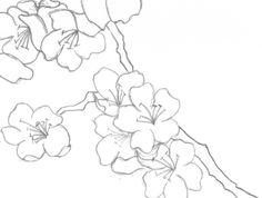 Japanese Cherry Blossoms (Black and White) by Super-Crazy-Weirdo ...