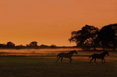 Sunrise, Pantanal, Brazil