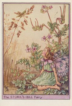 Cicely M Barker Fairies of the wayside ill 13 the stork s bill fairy 1948 | Flickr - Photo Sharing!