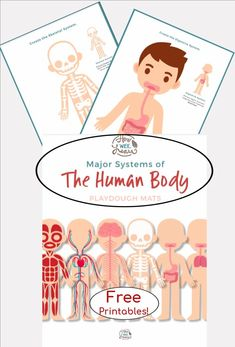 FREE Printable Human Body Playdough Mats! These playdough mats are perfect for teaching children about the 6 major systems in our bodeis: muscular, digestive, skeletal, circulatory, respiratory, and the nervous systems! Such a fun way to learn all about the Human Body! Educational Activities For Preschoolers, Playdough Activities, Creative Activities For Kids, Science For Kids, Toddler Activities, Preschool Activities, Human Body Unit, Human Body Systems, Body Preschool