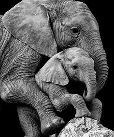 Mama with baby – Lena Spree - Baby Animals Photo Elephant, Cute Baby Elephant, Elephant Art, African Elephant, African Animals, Cute Baby Animals, Animals And Pets, Funny Animals, Mother And Baby Animals