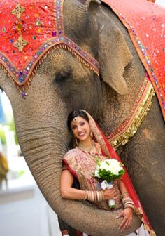 A portrait of the Indian wedding bride with the elephant.