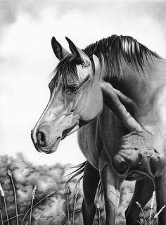 Emma's Meadow by Glynnis Miller Pencil