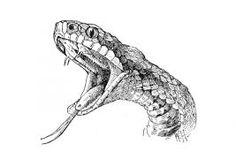 dibujos de serpientes - Buscar con Google