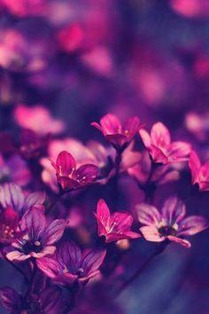 purple flowers #GUESSGirlBelle