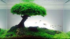 Xmas Moss Live Aquarium Plant Java Fish Tank Fern Aquatic Seed Garden Pond 12 C | eBay