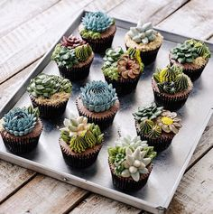 Succulent Cakes By Ivenoven Will Make Every Succulent Lover's Mouth Water | Bored Panda