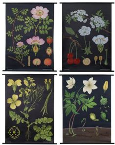 black background botanicals