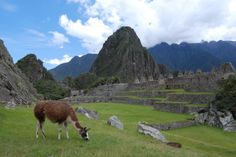 Machu Picchu, Peru | photo by Megan Ball, Avanti Destinations