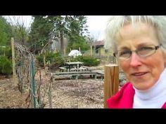 Spring Garden Tour - Wisconsin Garden Video Blog 495
