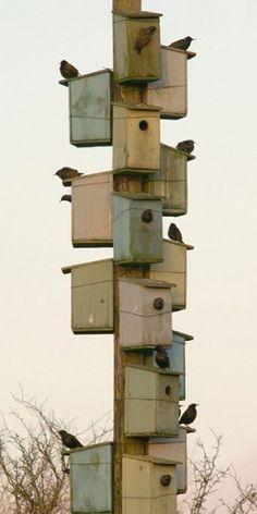 Verzameling vogelhuisjes op een paal. Leuk voor de mussen.