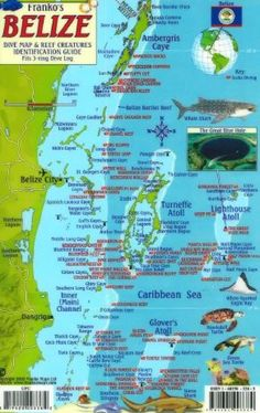 Belize Scuba Diving Map and Reef Creature Identification guide, Ambergris Caye, San Pedro, Caribbean and Central American Maps San Ignacio is a great place to look into Barbados, Jamaica, Map Of Belize, Belize City, Belize Travel, Scuba Travel, Belize Flag, Santorini Travel, Belize Vacations