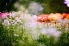 Tuloa Skanssin puistoalueelle ohjaa kukkaniitty. Niitty tukee luonnon monipuolisuutta niin kasvien kuin eliöstönkin osalta.