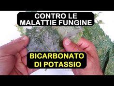 BICARBONATO DI POTASSIO ANTIFUNGINO - YouTube The Cure, Youtube, Bob, Gardens, Album, Instagram, Bob Cuts, Tuin, Garden